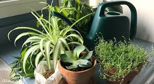 House And Garden 8 Week Feed Chart Houseplant Fertilizer Basics How And When To Feed Houseplants