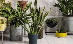 on stem and pyramid artificial modern tall indoor plants house uk bay tree ball plant stand