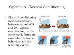 operant conditioning essay operant conditioning essay gxart  operant conditioning essay gxart orgclassical conditioning essay bid writing servicesclassical and operant conditioning essays classical conditioning