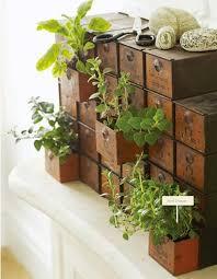 mini indoor gardening 14