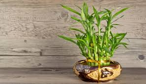 Office cubicle plants Cubicle Decor Office Cubicle Plants With Cubicle Friendly Plants To Green Your Workspace Interior Design Office Cubicle Plants With Cubicle Friendly Plants To Green Your