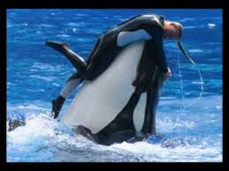 tilikum attack footage. Plain Tilikum Current Song Image With Tilikum Attack Footage N