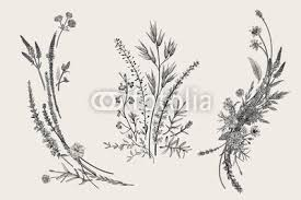 Summer Floral Composition Design Elements Flowers And Plants Of
