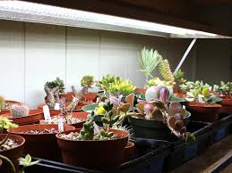 Succulent Grow Light Setup Succulent Grow Light Recommendations Mountain Crest Gardens