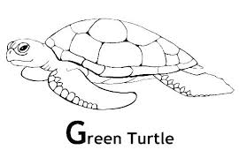 Printable Sea Turtle Coloring Sheet Sea Turtle Coloring Page