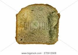 White Bread Mold Images Illustrations Vectors Free Bigstock