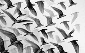 vintage bird wallpaper tumblr. Perfect Tumblr Image For Tumblr Vintage Black And White Background Wallpaper On Bird E