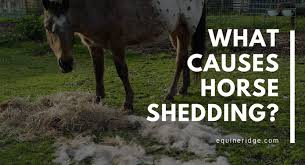what causes horse shedding