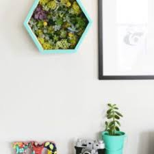 DIY Succulent Wall Planter