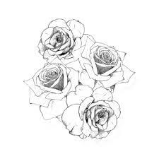 Tatuaggio Rosa Disegno Rosa 500500 Png Trasparente Scarica Gratis