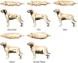Pitbull Puppy Growth Chart How Big Should My 5 Month Old Pitbull Puppy Be