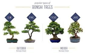 once you ve figured out what type of bonsai tree you have the rest is fairly simple here are some general tips on bonsai tree positioning that typically