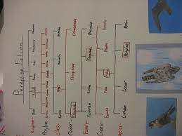 Linnaeus Taxonomy Chart Related Keywords Suggestions