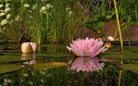 carpe diem haiku kai carpe diem tokubetsudesu an essay about credits rising from the depths of the pond