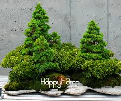 office bonsai. timelimit50 juniper bonsai tree potted flowers office purify the air n