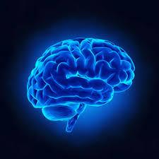 Image result for brain alzheimers