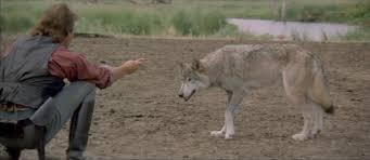 dances wolves movie forums dances wolves
