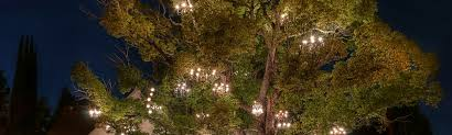 the chandelier tree is a beacon for romance in los angeles