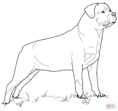 Small Picture Rottweiler coloring page Free Printable Coloring Pages