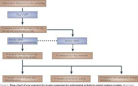 Figure 4 From Antimalarial Drug Discovery Efficacy Models