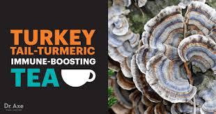 <b>Turkey Tail Mushroom</b> Benefits, Uses and Recipes - Dr. Axe