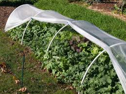 vegetable plants with row cover in the garden