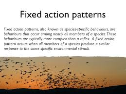 Fixed Action Pattern Example Gorgeous Lesson 48 Behaviours Not Dependent On Learning