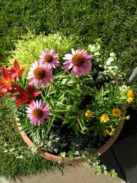 35 Beautiful Container Gardens  Midwest LivingContainer Garden Plans Flowers