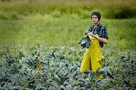 are organic farms really worse when it comes to greenhouse gases