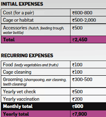 Want To Know The Real Cost Of Keeping A Pet Find Out The
