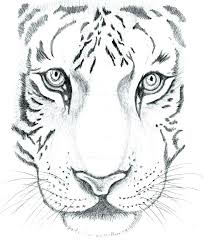 Cool Drawings Of Animals Wearpapu Co