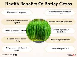 Learn more about barley's health benefits, and how to prepare and serve it, here. Benefits Of Barley Grass And Its Side Effects Lybrate