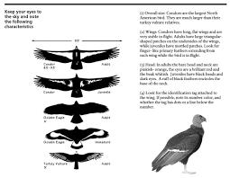 76 Scientific Eagle Comparison Chart