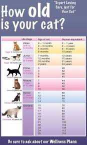 Cat Years Chart Calculator How Old Cat Ages Cat Age Chart Cat Years