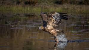 Birds of Prey, Greater Brisbane Region ...