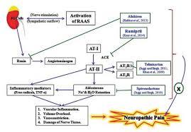 Renin Angiotensin Aldosterone System A Current Drug Target