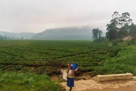 Unterwegs von Uganda nach Ruanda - Von Philipp Laage