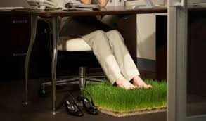 Considerations For Office Plants And Greenery