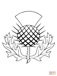 The Thistle Of Scotland Coloring Page Free Printable Coloring Pagesl