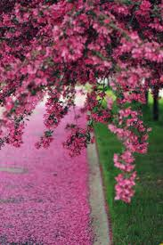 299 best images about Spring Fever on Pinterest Flower Pink.