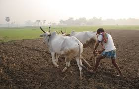 Image result for wikimedia commons small farmer