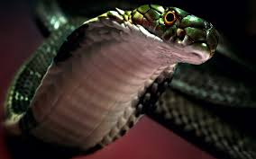 snakes images snake hd wallpaper and background photos