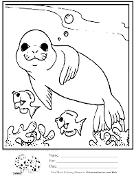 Small Picture coloring page seal swimming with fish Coloring Pages Pinterest