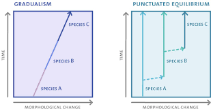 sample essay evolution modern evolutionary biology seminars  gradualism vs punctuated equilibria here are two models of speciation gradualism where a species slowly changes over time and punctuated equilibrium