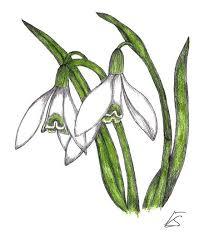 Sněženka podsněžník (Galanthus nivalis) - iDNES.cz