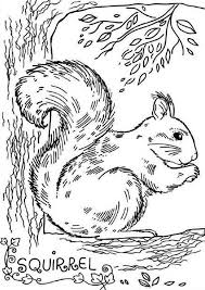 Small Picture Realistic Picture of Squirrel Coloring Page Download Print