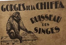 Gorges de la Chiffa Ruisseau des Singes Carnet de cartes postales   Carte  postale, Postale, Singe