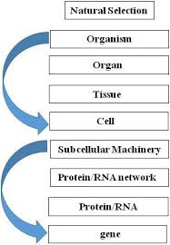 What Is Homeostasis In Biology Biology Free Full Text Homeostasis As The Mechanism Of
