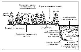 ris gif С экологической точки зрения в структурном составе экосистемы выделены следующие компоненты рис 3 1 неорганические вещества С n co 2 h2o и др