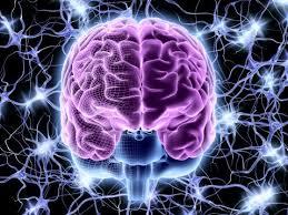 El increíble hallazgo de 97 zonas que no se conocían del cerebro.